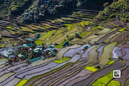 Philippines-Banaue_Rice_Terraces-124