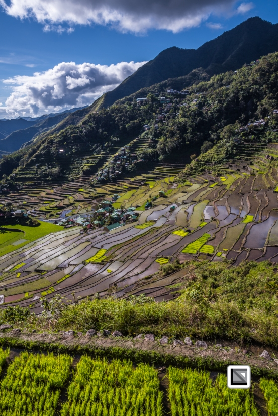 Philippines-Banaue_Rice_Terraces-146
