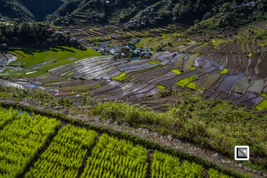 Philippines-Banaue_Rice_Terraces-156