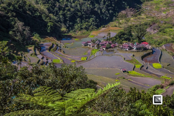Philippines-Banaue_Rice_Terraces-178