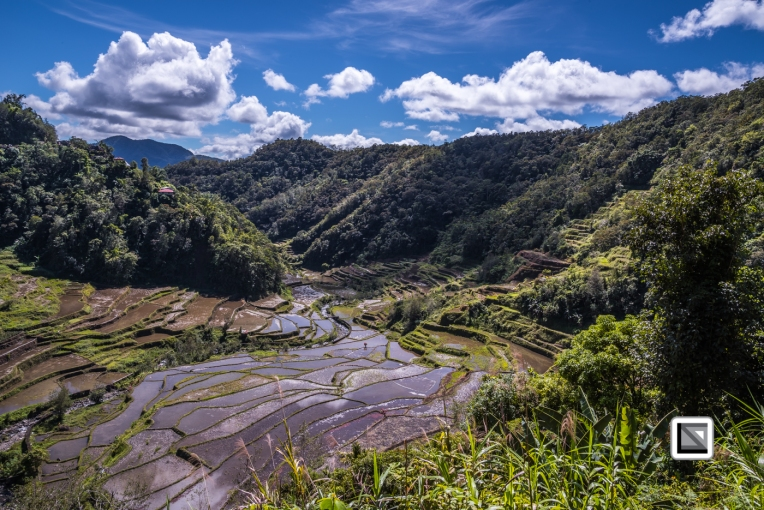 Philippines-Banaue_Rice_Terraces-181