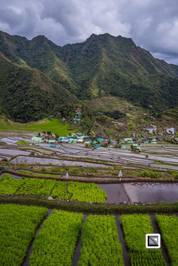 Philippines-Banaue_Rice_Terraces-44