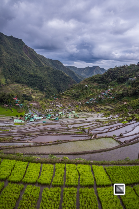Philippines-Banaue_Rice_Terraces-45