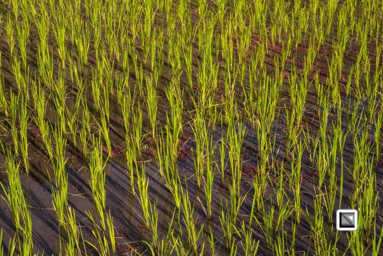 Philippines-Banaue_Rice_Terraces-89