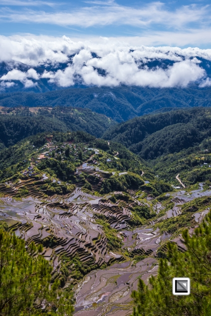 Philippines-Malingcon_Rice_Terraces-21