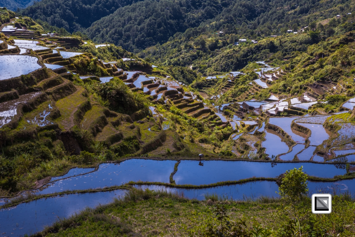 Philippines-Malingcon_Rice_Terraces-23